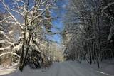 la forêt de la Rothlach