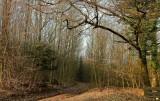 la forêt de Lutzelbourg