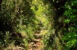 la forêt de Luri