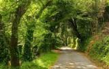 la forêt de Luri #3
