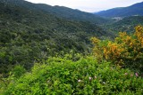la forêt de Luri # 4