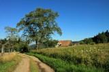 la forêt de Boersch