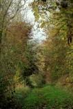 le Bastberg en automne #3