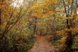 la forêt de  Heiligenberg #3