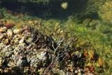 algues et coquillages