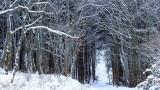 forêt de Bernardvillé