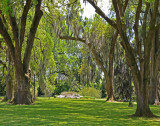 Lovely Grounds of Houmas House; Note Spanish Moss on Trees