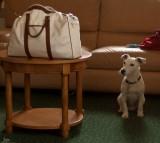 BOURGOGNE.MICHKA and his Bag