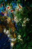 --Flowers 2013 2014-