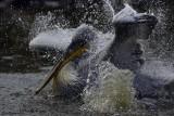 The great splash