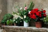 San Gimignano .Italian Flowers poats