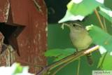 Oiseaux de Dunany / Birds from Dunany