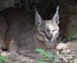 Haifa-Zoo_25-3-2014 (97).JPG