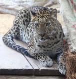 Haifa-Zoo_25-3-2014 (55).JPG