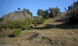 Borjumi_22-9-2011 (2).JPG