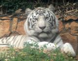 Haifa-Zoo_25-3-2014 (51).JPG