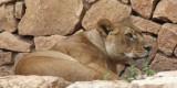 Haifa-Zoo_25-3-2014 (73).JPG