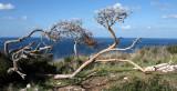 Stela-Maris_26-12-2011 (30).JPG