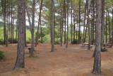 Hanita-Forest_7-9-2016 (3).JPG
