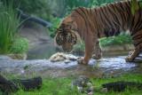 Photos from the April 25, 2015, Photo Safari at the Dallas Zoo