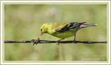 Chickadees & Other Small Birds
