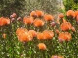 Garden, Encino