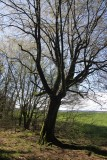 Near Buchendorf