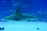 underwater - Eilat