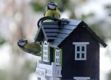 Birdhouse on my Windowsill
