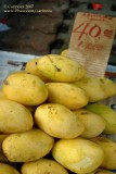 'Manila' Mangoes (from Zambales!)