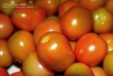 Kamatis / Tomato