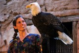 Huge bald eagle and trainer