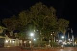 Liberty Tree, night