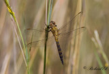 Unidentified Dragonfly and Damselfly