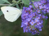 from_the_butterfly_garden