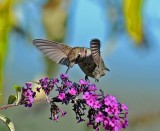 5 humming bird.jpg