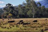 Warburton Trail Victoria