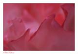 roos petals