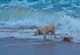 Calvert's Beach, June 2012