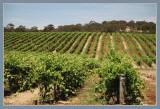 Barossa Valley & Wineries in Spring
