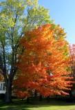 Couleurs dautomne / Autumn mood