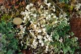 Lichens des pelouses sèches 2015