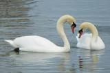 Swan Lake P1000695
