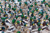 Still haven't got all my ducks in a row.....maybe next year....  :)