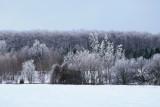 Hoar Frost near Collingwood/Gibralter & Bruce Trail - Jan 2017