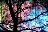 January 2014 Challenge : Trees
