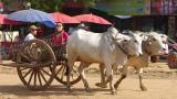 Battambang i Banteay Chmar