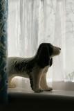 My watchdog