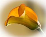 BLA_5991.web.jpg
