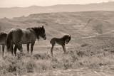 2015-03-21 horses_0477 copy.jpg